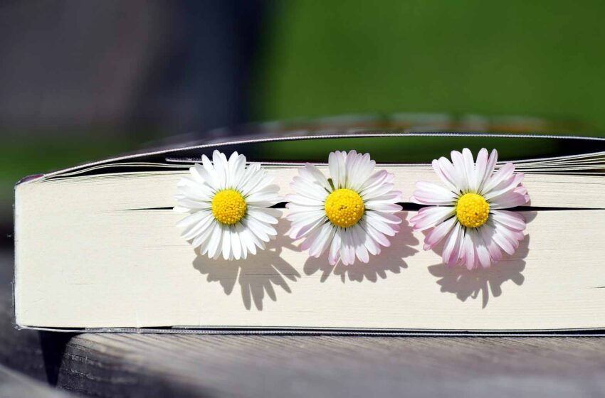 Sun Flowers Placed In the Book Pages